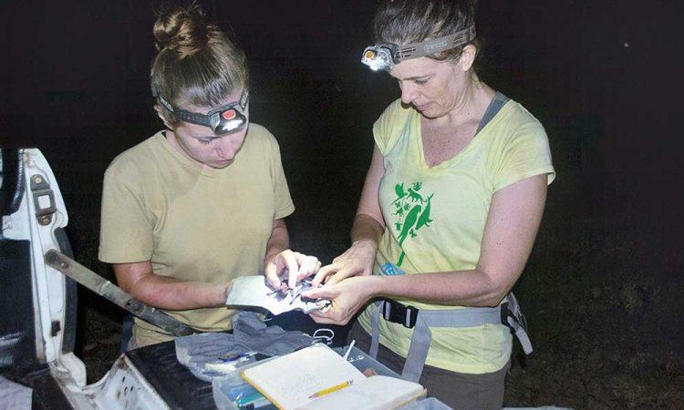 Intelligent Virtual Personal Assistant for Bat Scientists